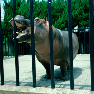 '05.7.21 京都市動物園 027 16_20.jpgの複製