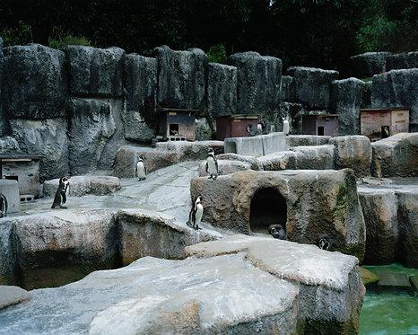 hamamatsu zoological gardens #13 2012
