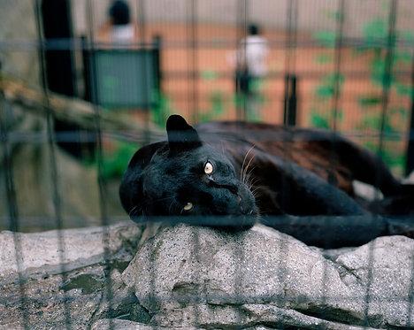 asahiyama zoo #9 2007