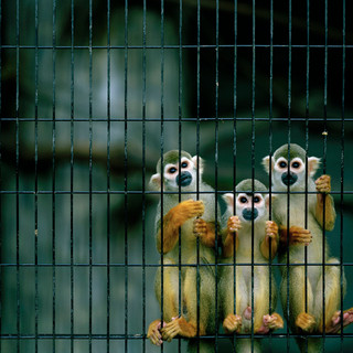 2007.10.17 静岡市立日本平動物園 025 16_20.jpgの複製
