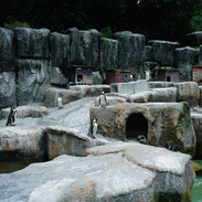2012.10.30 浜松市動物園 013_4_1.jpgの複製