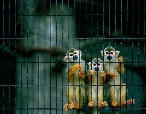 nihondaira zoo #25  2007