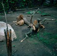 2004.7.28旭山動物園 024_2 16_20.jpgの複製