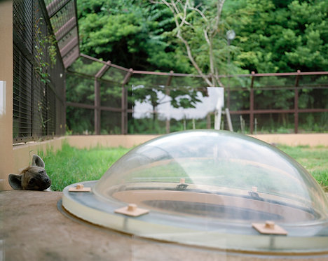 noichi zoo #13 2012