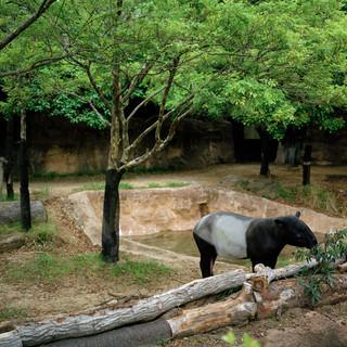 2013.5.16 よこはま動物園ズーラシア 001_3_1.jpgの複製