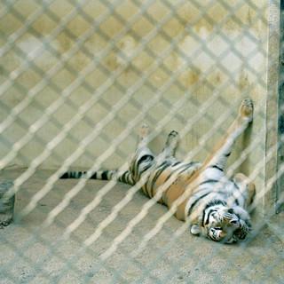 2006.11.4広島市安佐動物公園 027 16_20.jpgの複製
