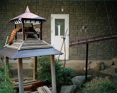 hamamatsu zoological gardens #26 2012
