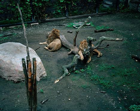 asahiyama zoo #24 2007