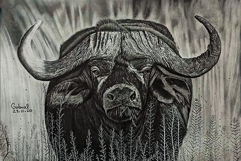 49€ - Desenho realista de búfalo-africano