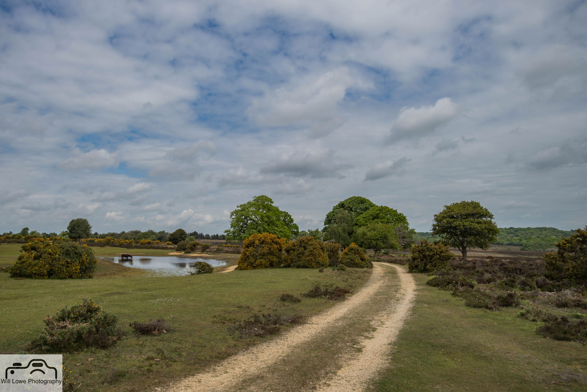 Bratley - New Forest