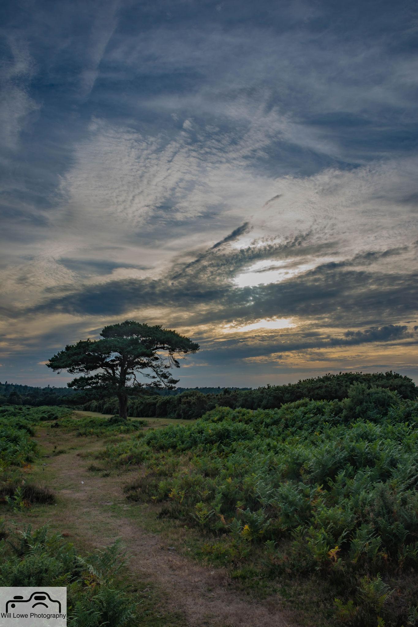 Lone Tree Bratley View