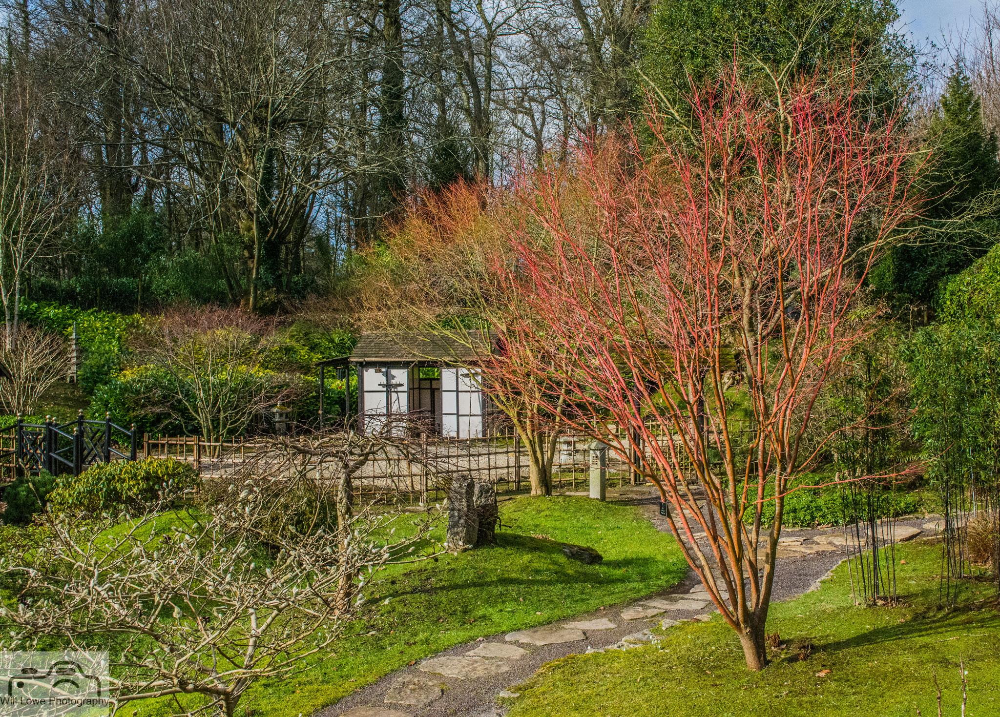 Japanese Garden-Kingston Lacy