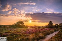 Golden Hour Studland Heath