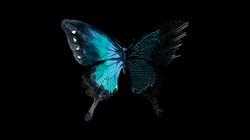 butterfly 72dpi