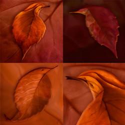 Leaf-Bird