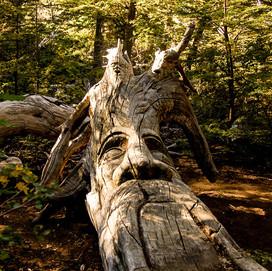 bosque-tallado-4b.jpg