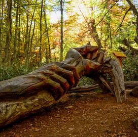 Bosque tallado-03.jpg
