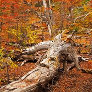 Bosque Tallado-001.jpg