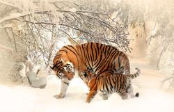 animal-photography-animals-big-cats-39629