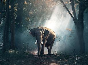 animal-photography-daylight-elephant-247