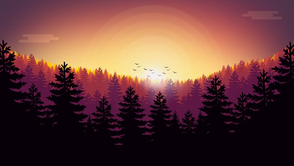 ForestIllustration1.png
