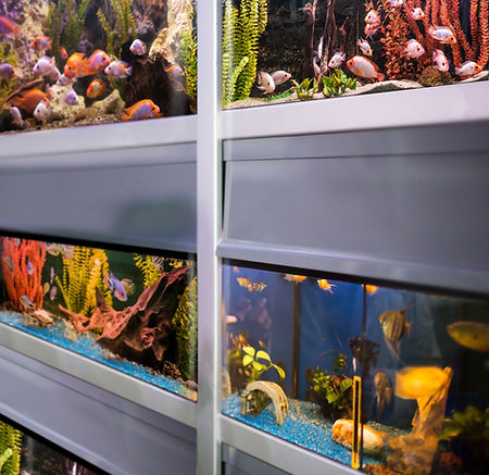 דגי נוי, ציוד לאקווריום ומזון דגים