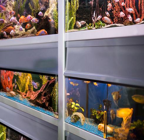 Fish Store
