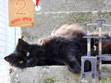 Advent Appeal - Day 2