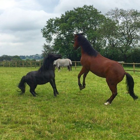 Harvey and Stan Playing