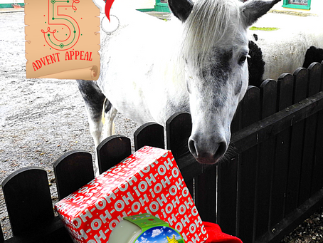 Advent Appeal - Day 5
