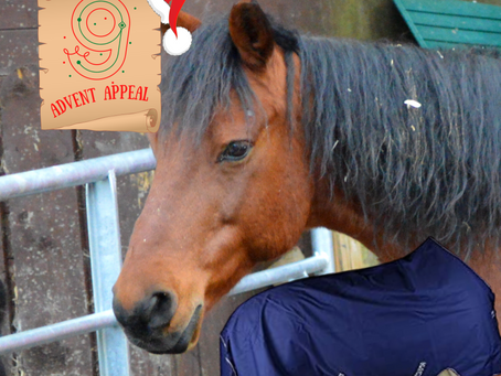Advent Appeal - Day 9