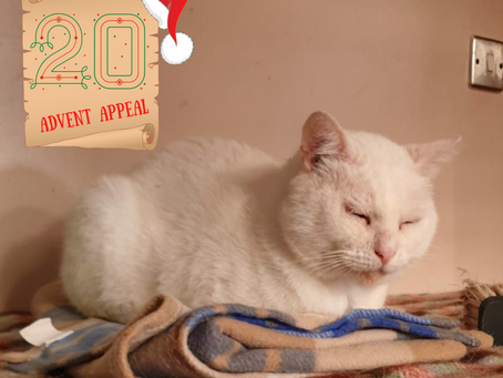 Advent Appeal - Day 20