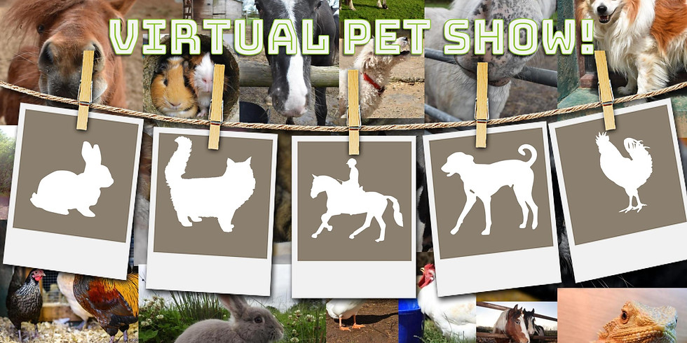The Big CLAS Virtual Pet Show