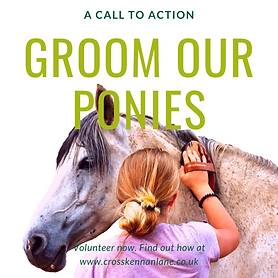 Groom Our Ponies.png