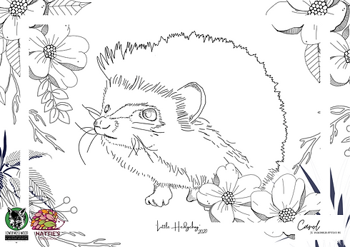 _Little Hedgehog_.png