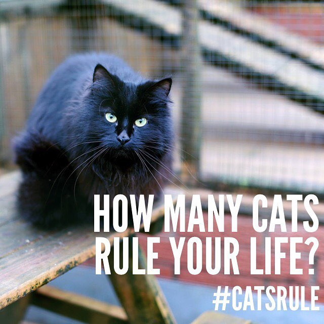 How many cats rule your life_ It is said