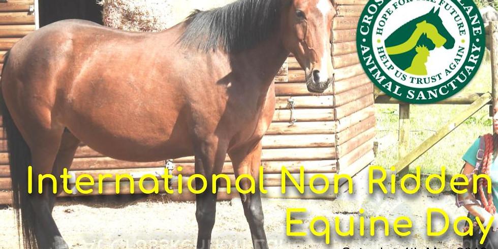 International Non Ridden Equine Day 2019