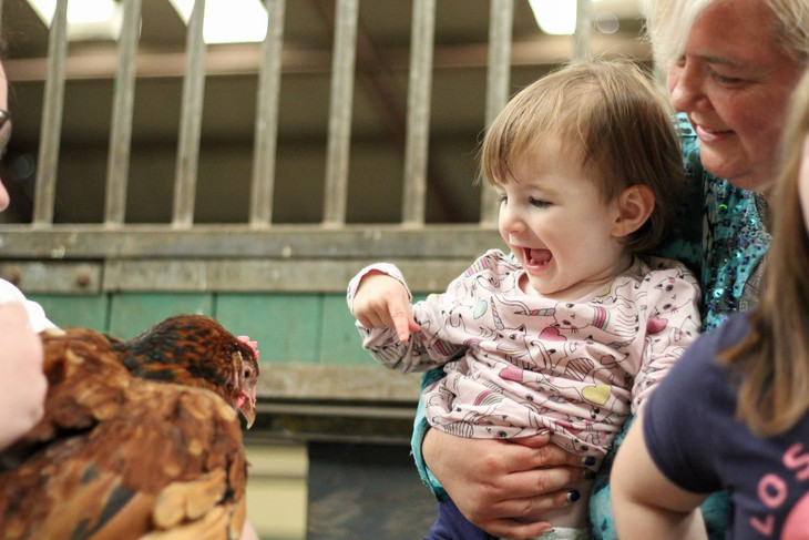 Thelma the hen making new friends