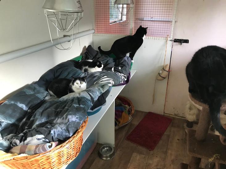 cat-shed-bernie-brooke-belle-betty