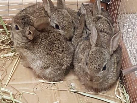 Bunny Update!