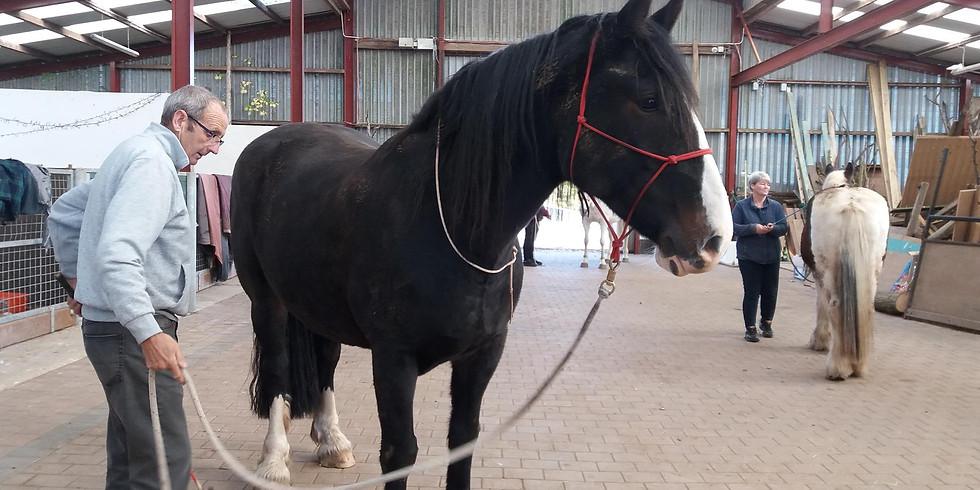 Natural Horsemanship Workshops