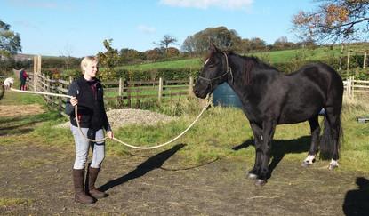 Natural Horsemanship Day 06.10.18.jpg