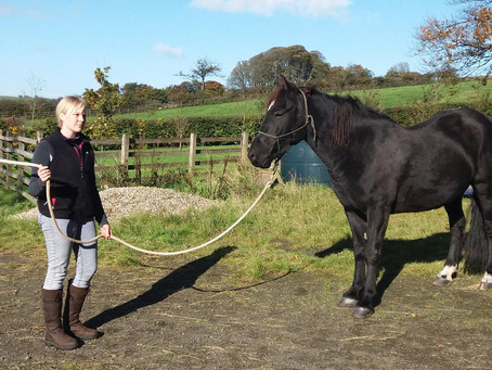 Natural Horsemanship Workshop