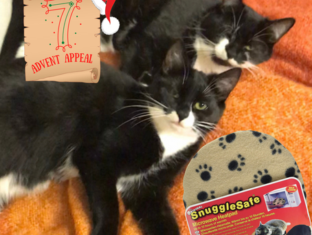 Advent Appeal - Day 7