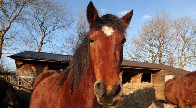 Sanctuary Horses 2015.JPG