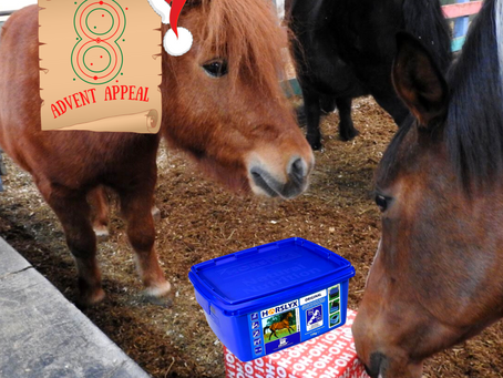 Advent Appeal - Day 8
