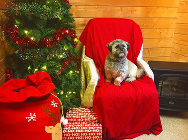 ollie-was-helping-the-elves-set-up-for-m