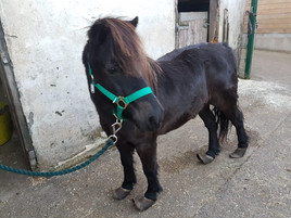 Pony Rescued 06-10-18