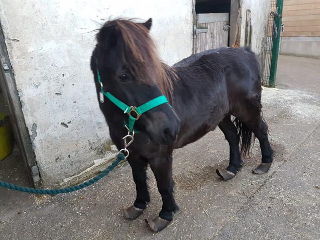 Pony Rescued 06-10-18
