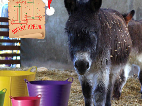 Advent Appeal - Day 11
